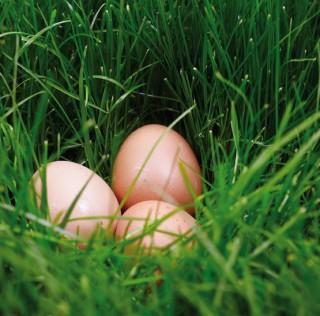 Qu'est-ce qu'un œuf BIO ?